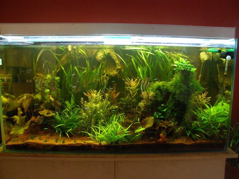 Forum de bee paysage for Mur vegetal aquarium