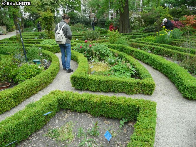 Phototh que jardin en labyrinthe de buis taille - Taille des buis ...