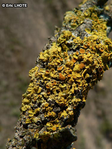 mousses-lichens-11.jpg