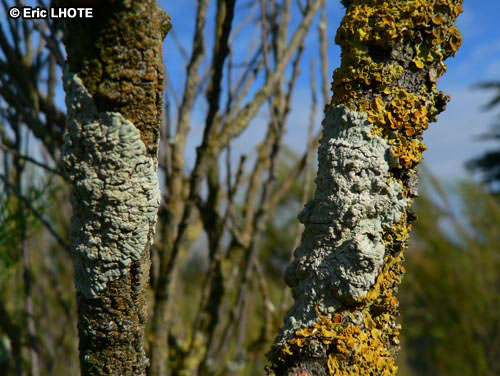 mousses-lichens-13.jpg