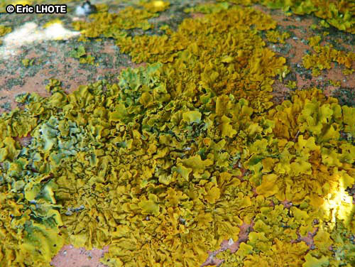 mousses-lichens-14.jpg