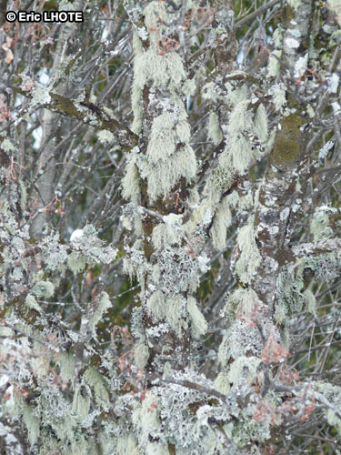 mousses-lichens-17.jpg