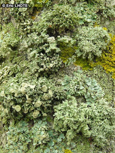 mousses-lichens-25.jpg