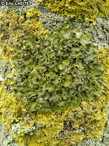 mousses-lichens-29.jpg