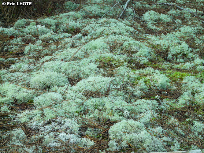 mousses-lichens-31.jpg