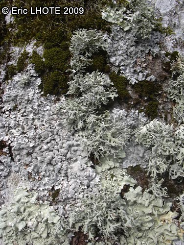 mousses-lichens-32.jpg