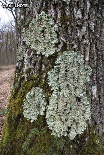 mousses-lichens-49.jpg