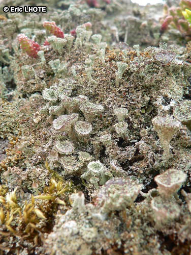 mousses-lichens-6.jpg